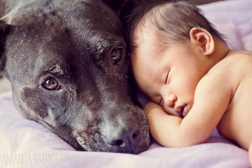 bebes e cachorros (2)