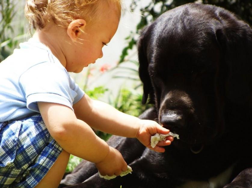 bebes e cachorros (30)
