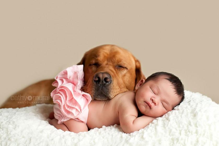 bebes e cachorros (8)