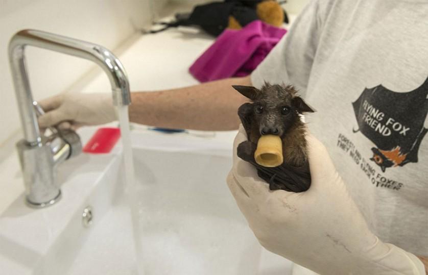 morcegos (1)
