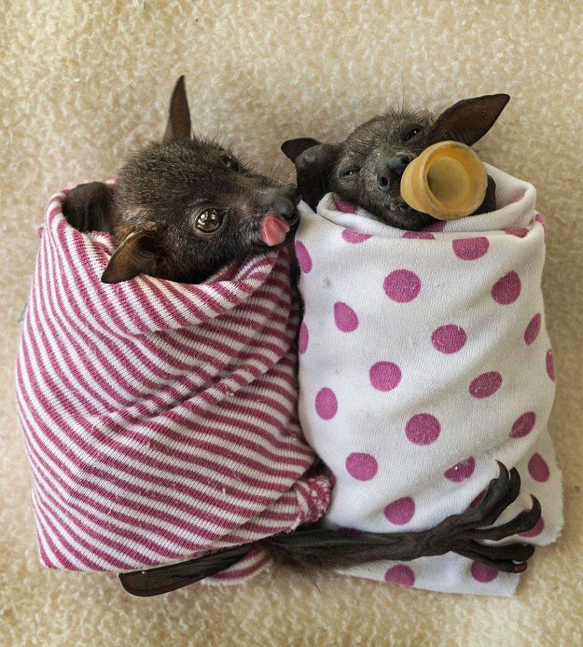 morcegos (11)