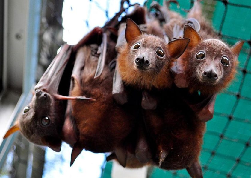 morcegos (14)