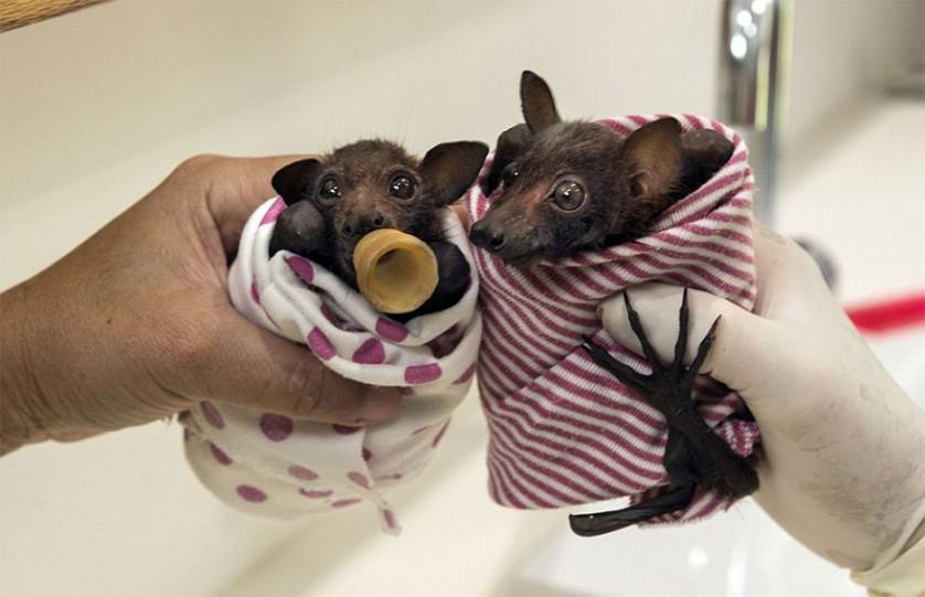 morcegos (5)