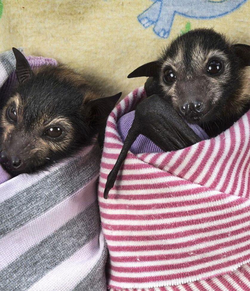 morcegos (7)