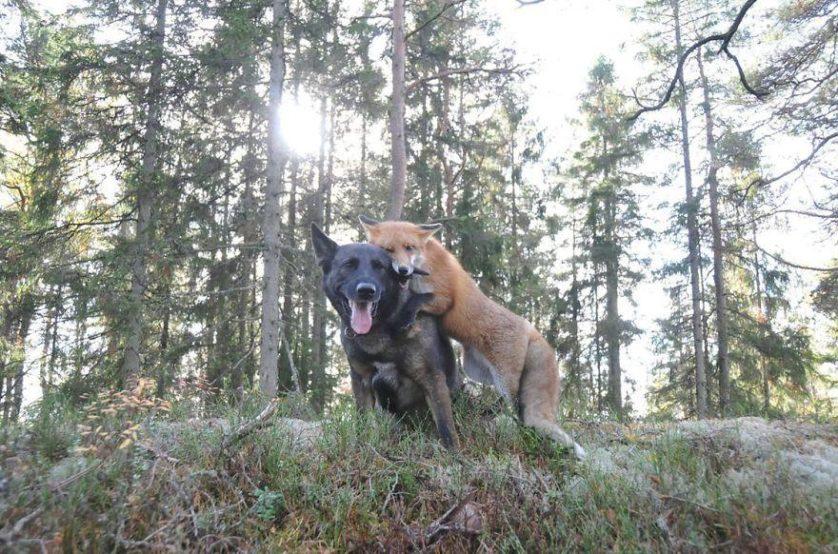 amizades animais 29