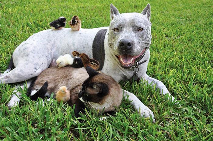 amizades entre animais 10
