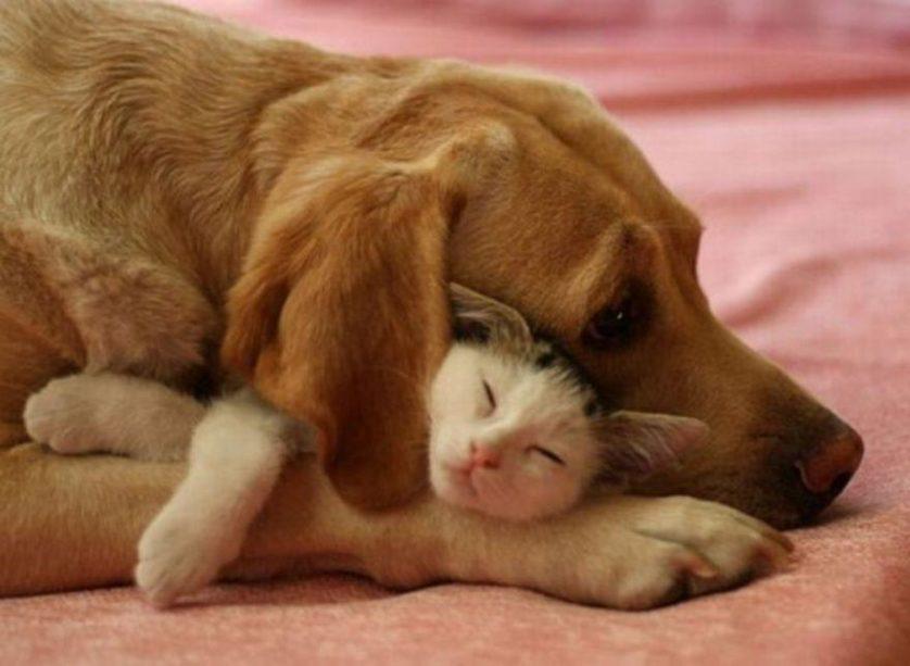 amizades entre animais 11