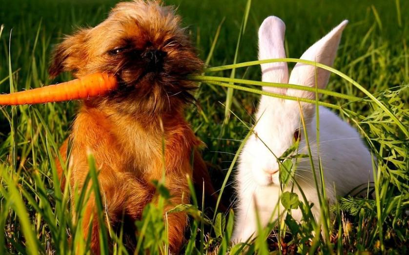 amizades entre animais 12