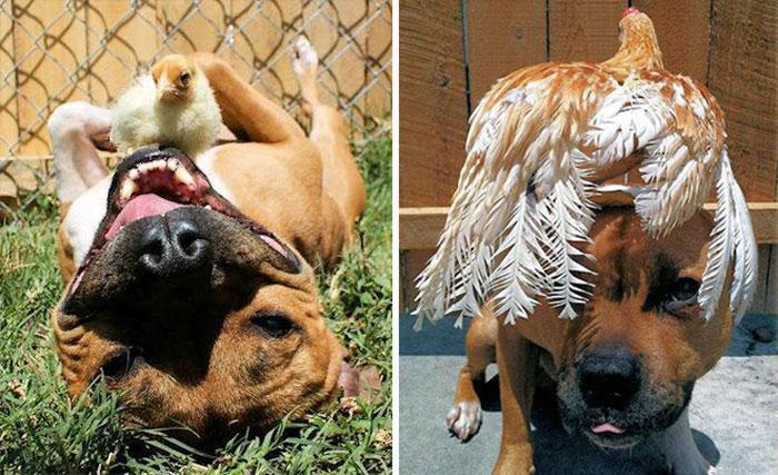 amizades entre animais 13