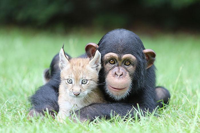 amizades entre animais 17