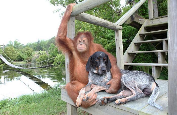 amizades entre animais 18