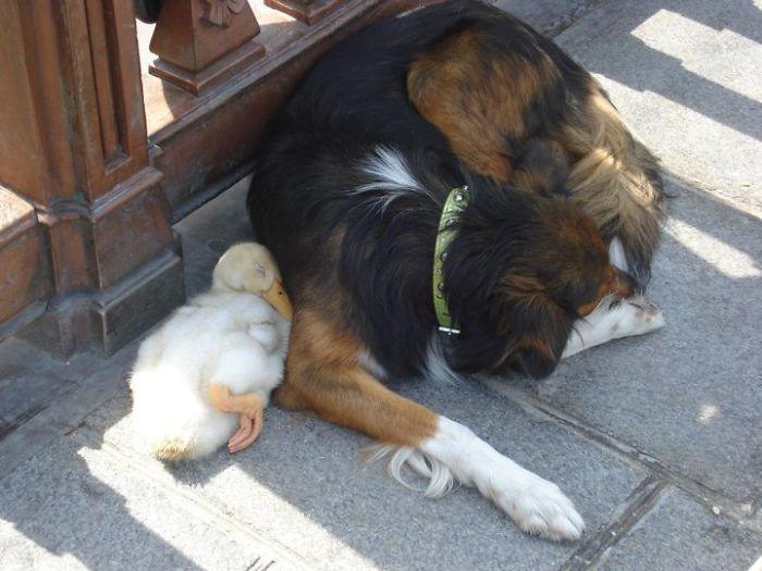 amizades entre animais 19