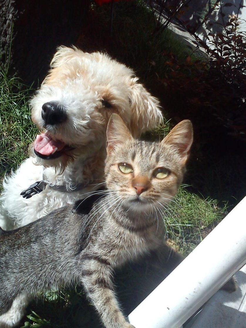 amizades entre animais 2