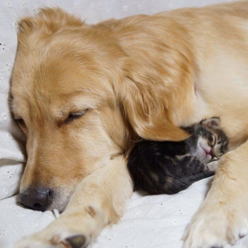 amizades entre animais 20