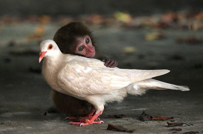 amizades entre animais 23