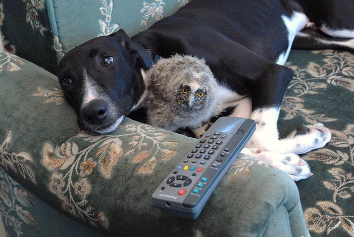 amizades entre animais 24-