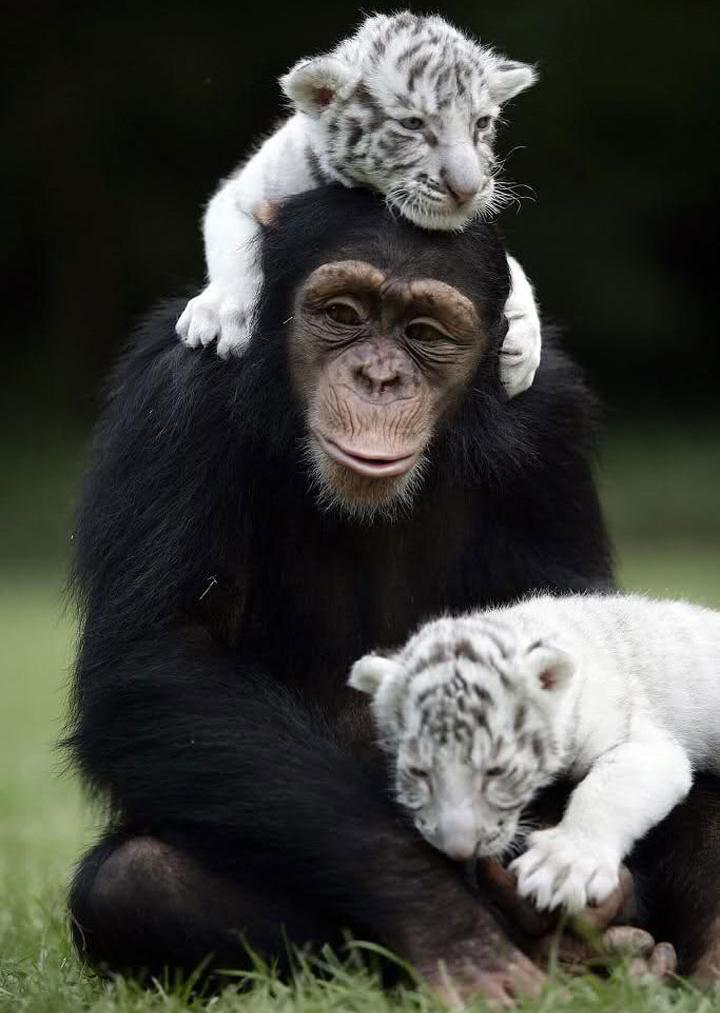 amizades entre animais 25-