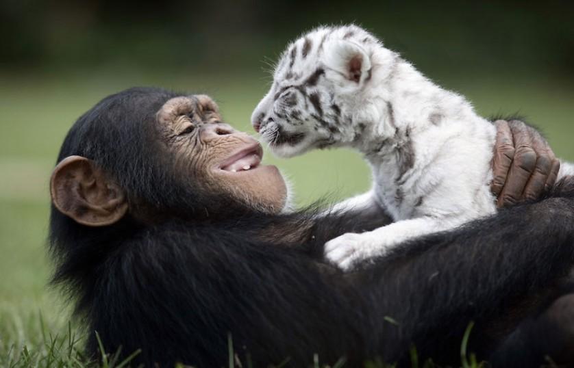 amizades entre animais 25