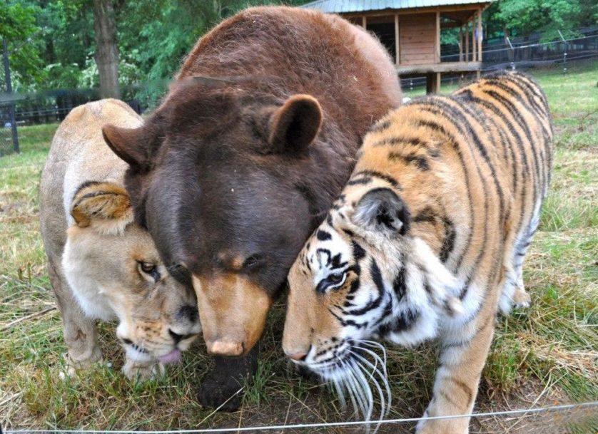 amizades entre animais 26-