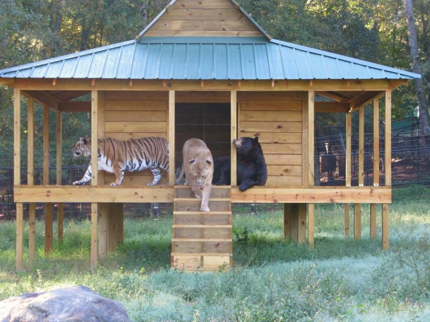 amizades entre animais 26