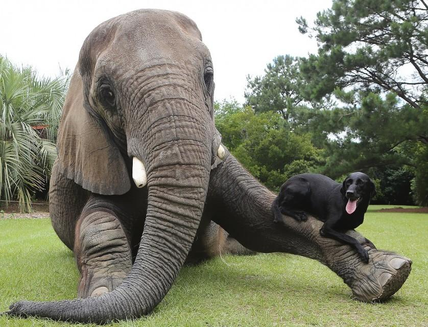 amizades entre animais 27-