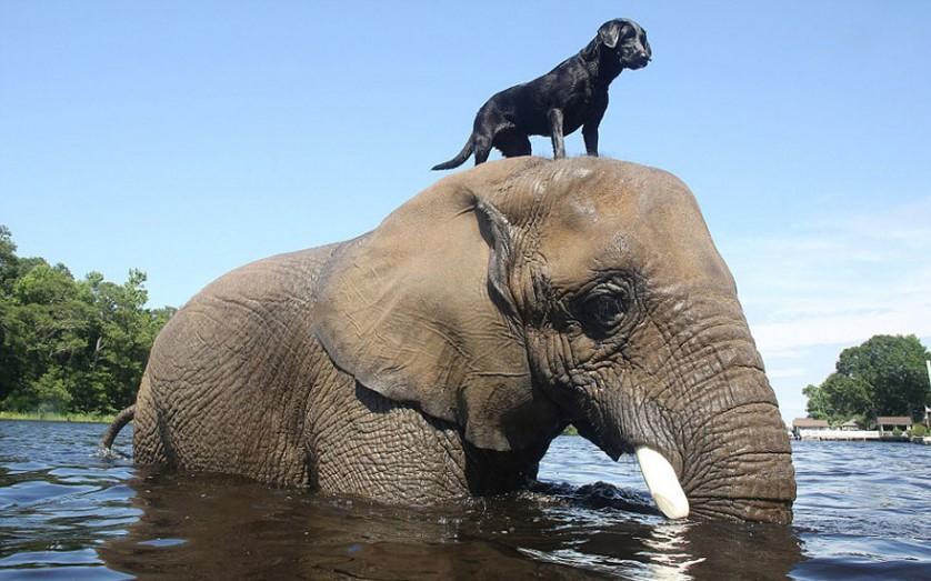 amizades entre animais 27