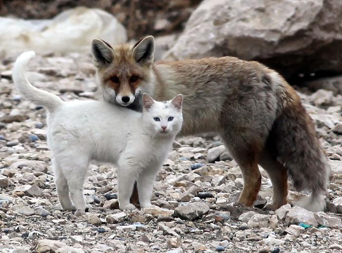 amizades entre animais 28