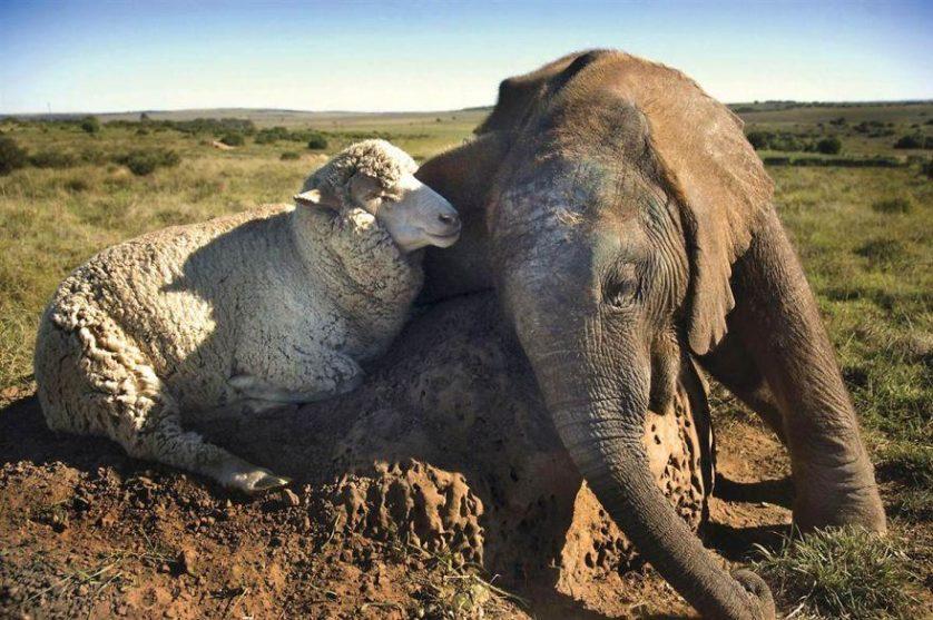 amizades entre animais 4