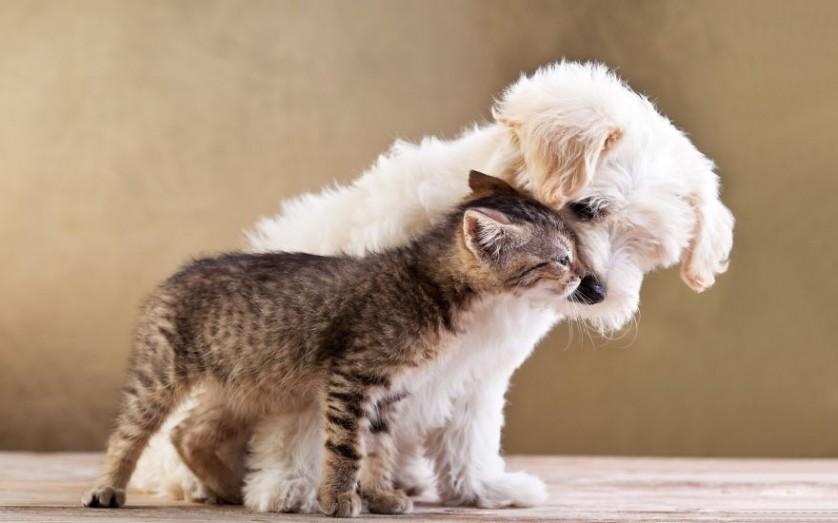 amizades entre animais 7