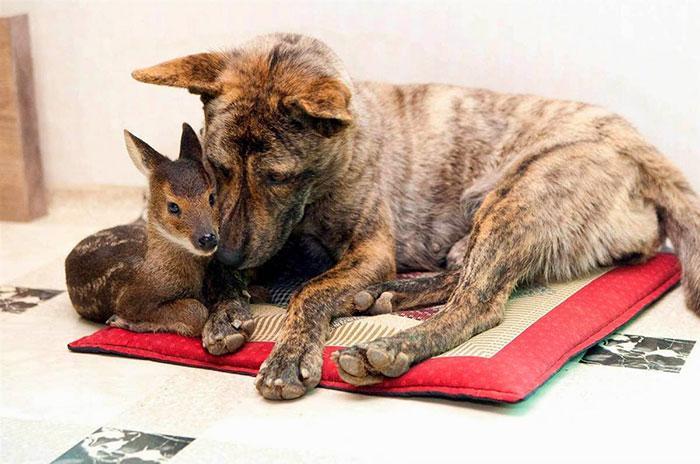 amizades entre animais 8