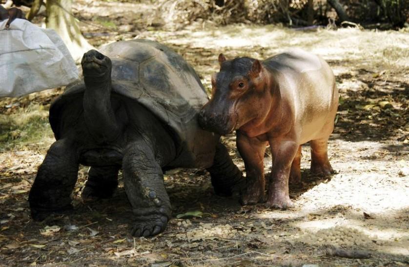 amizades entre animais 9