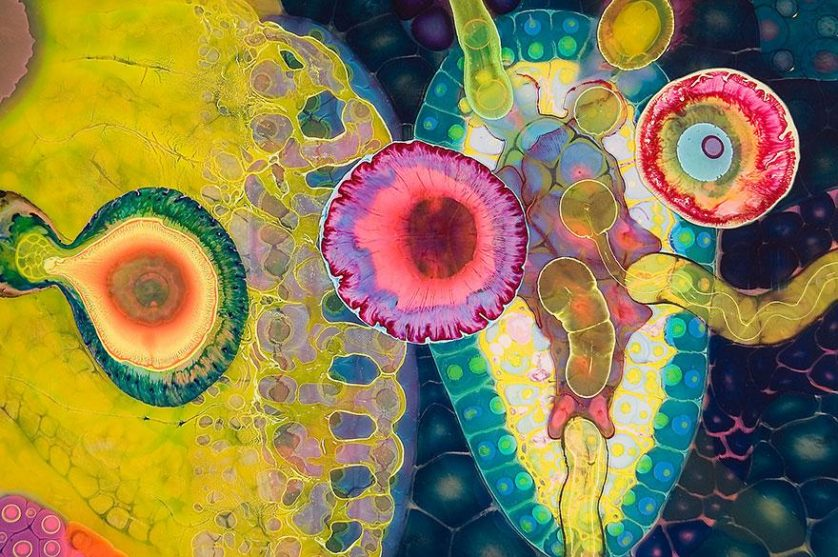 arte psicodélica mandalas 07