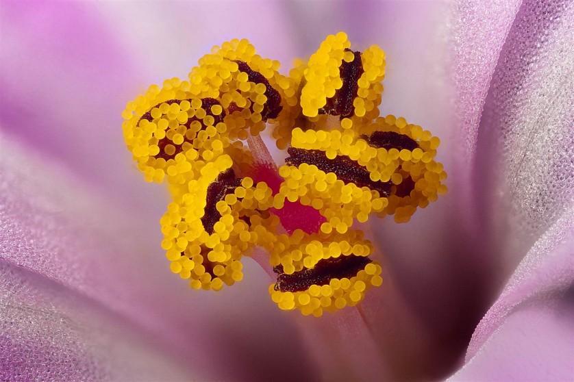 Os grãos de pólen são visíveis em uma flor silvestre conhecida como erva-de-São-Roberto. A menção honrosa foi para Karl Gaff de Dublin, na Irlanda