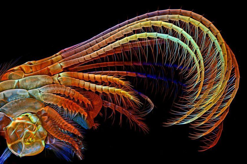 Esta foto dos apêndices de uma craca, por Igor Siwanowicz, ganhou o terceiro lugar. Os apêndices varrem plâncton e outros alimentos para dentro do animal, que os digere