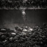 As imagens vencedoras do Concurso de Fotografia da National Geographic de 2014