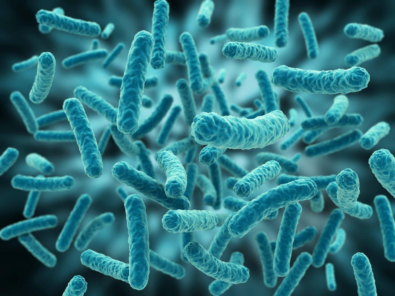 Mundo Universitário : Microbiologia- Aula 02 - Anatomia funcional de ...