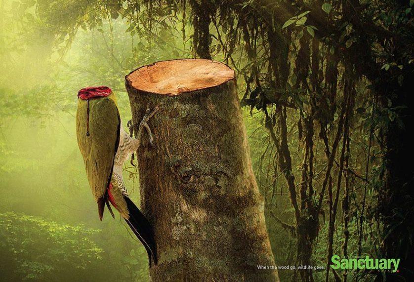 desmatamento anuncios (1)
