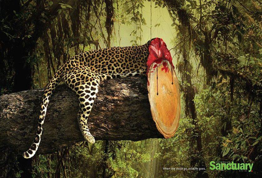 desmatamento anuncios (2)