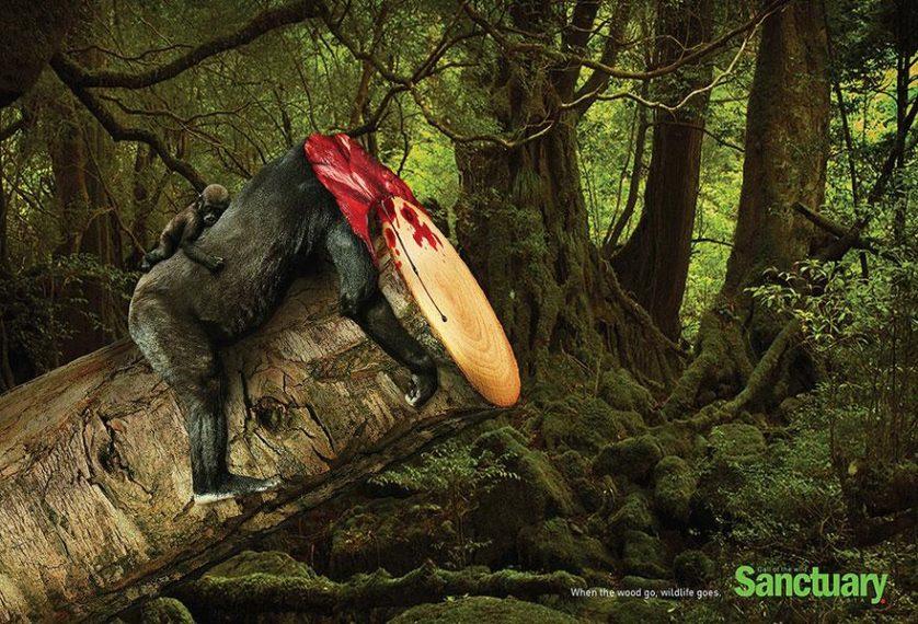 desmatamento anuncios (3)