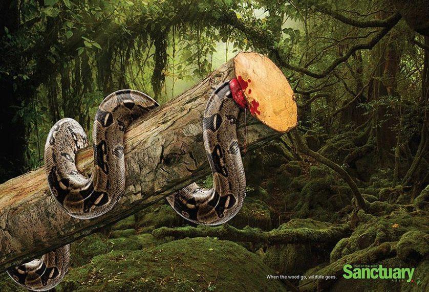 desmatamento anuncios (4)