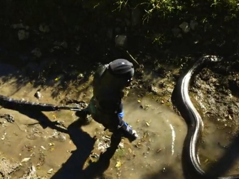 este-homem-foi-engolido-por-uma-anaconda (1)