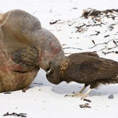 Os animais pelos quais a evolução não tem a menor simpatia