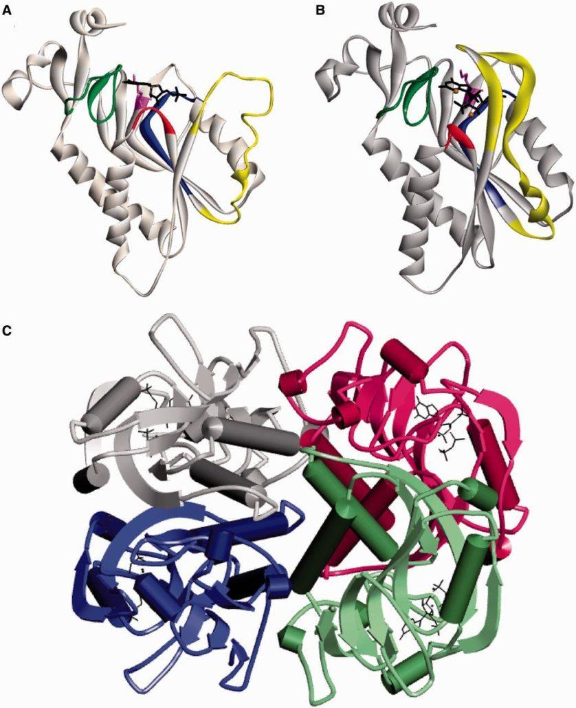 mutacoes geneticas 5