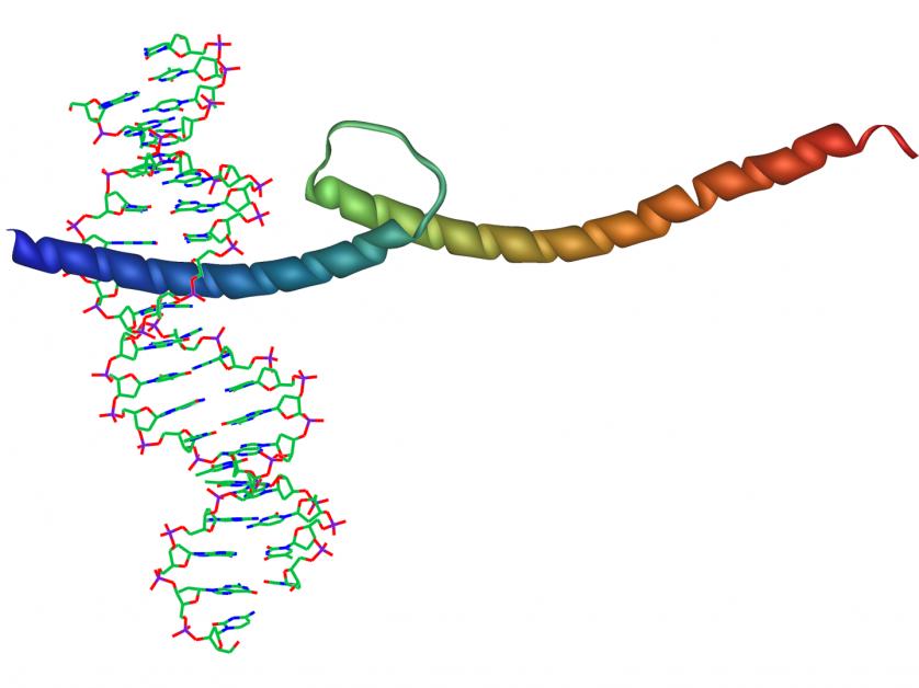 mutacoes geneticas 6