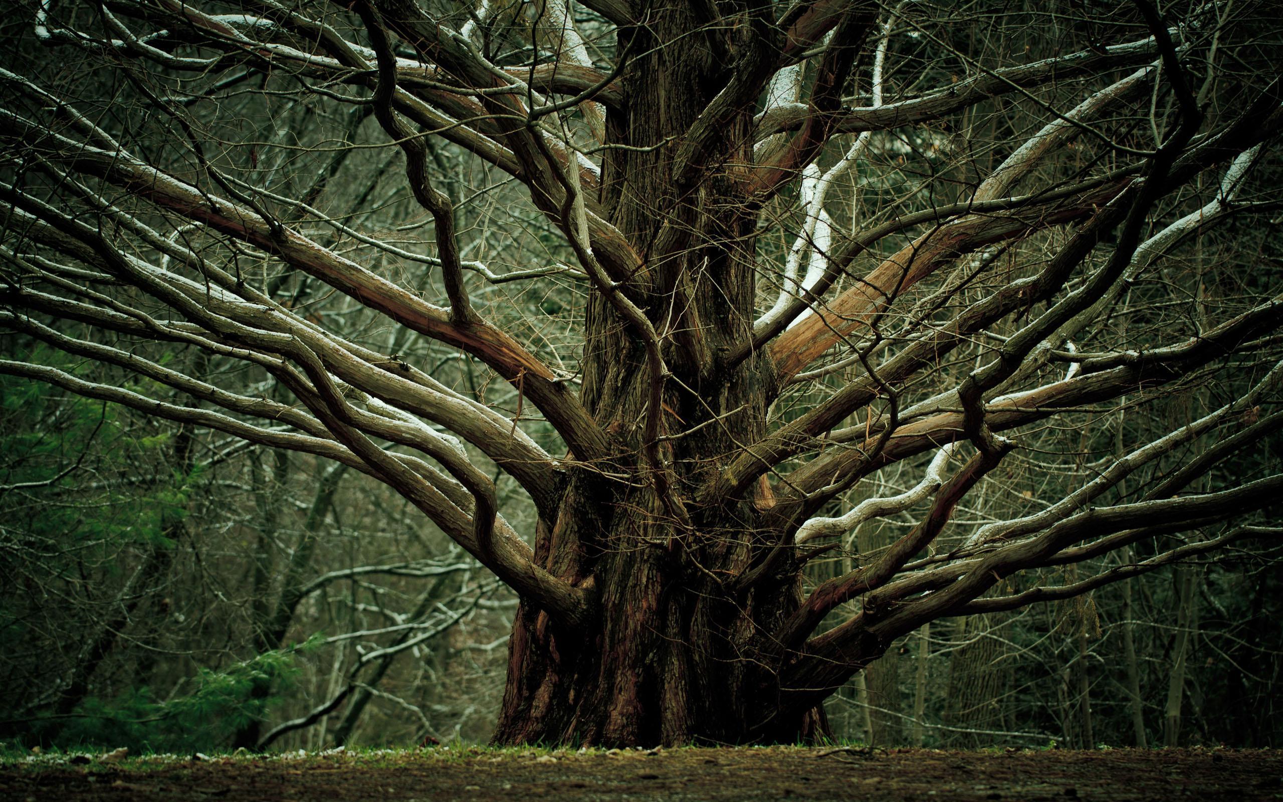 Árvore na Guiné pode ser a origem do surto de Ebola