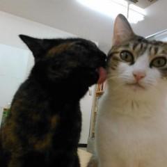 Gatos aliviam o estresse de escritório no Japão