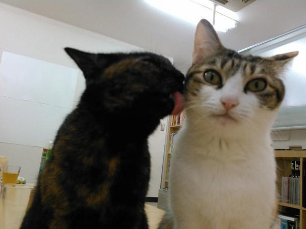 gatos escritorio japao (1)