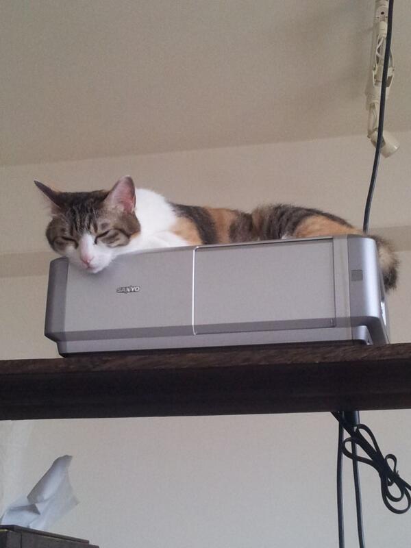 gatos escritorio japao (3)