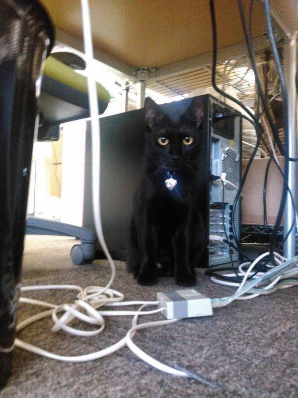 gatos escritorio japao (5)