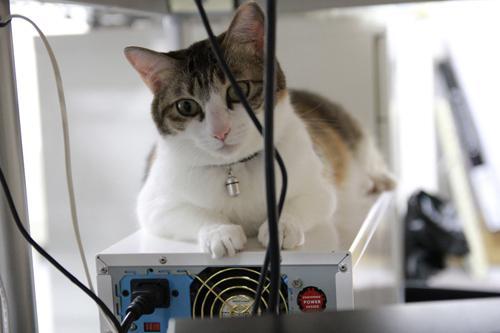 gatos escritorio japao (6)